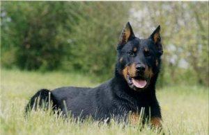 Devis assurance chien categorie 2